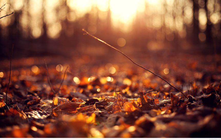 Falling like leaves